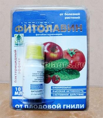 Обрабатываем рассаду томатов от болезней